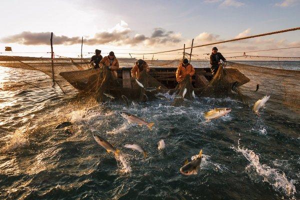 Украинские рыбаки боятся «российского возмездия» за захват «Норда»