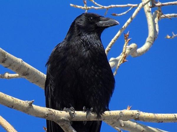 Исследователи обнаружили у птиц «гормон любви» окситоцин
