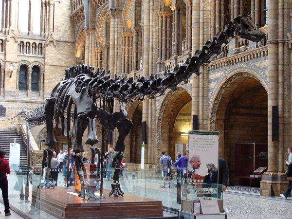 Во Франции продали скелеты диплодока и аллозавра