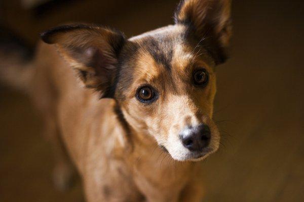 Искусственный интеллект научился предсказывать поведение собак