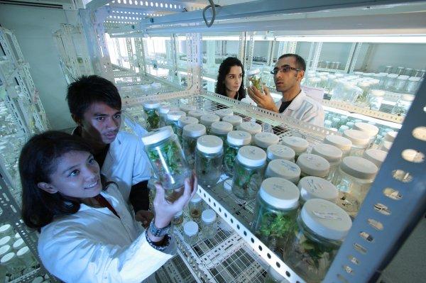 Ученые придумали инновационную методику лечения гепатита С