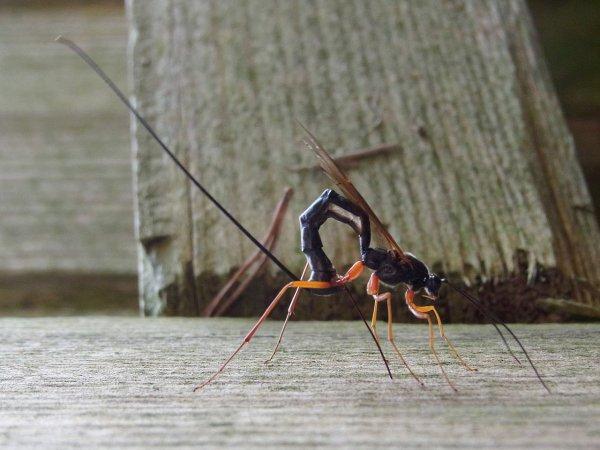 В Мурманской области энтомологи нашли два новых вида насекомых