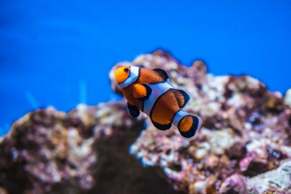 Биологи рассказали о навыках рыб, которым позавидует самый талантливый трюкач
