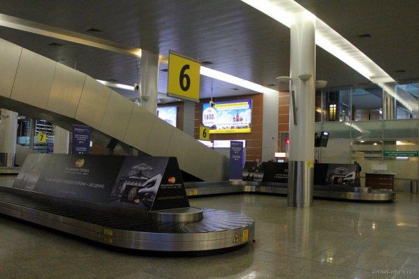 Пассажирка Шереметьево отправилась по ленте выдачи багажа спасать свою собаку
