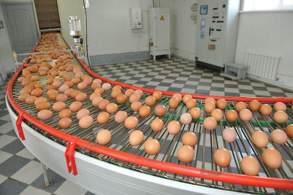 В США из-за сальмонеллы отозвали более 200 млн яиц