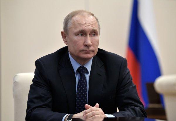 Путин разрешил сбор валежника в России