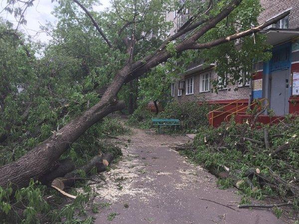 Количество пострадавших от урагана в Москве увеличилось до 25