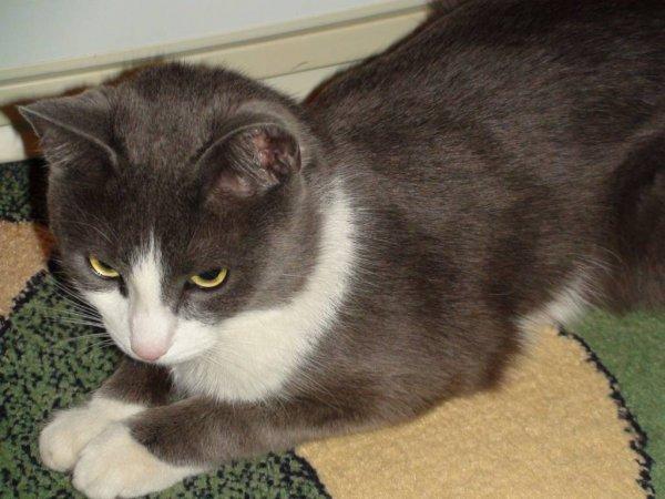 Кот из Приморья преодолел более 130 километров под капотом автомобиля