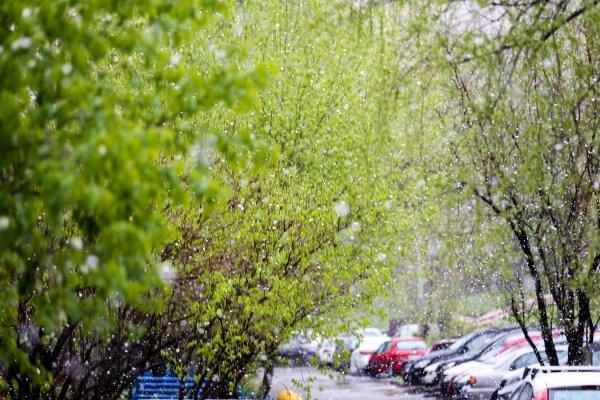 Жители Москвы показали в Сети снимки весеннего снега