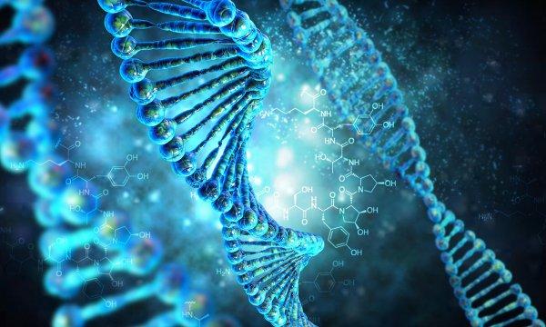 Ученые разработали атлас генома человека, используя стволовые клетки