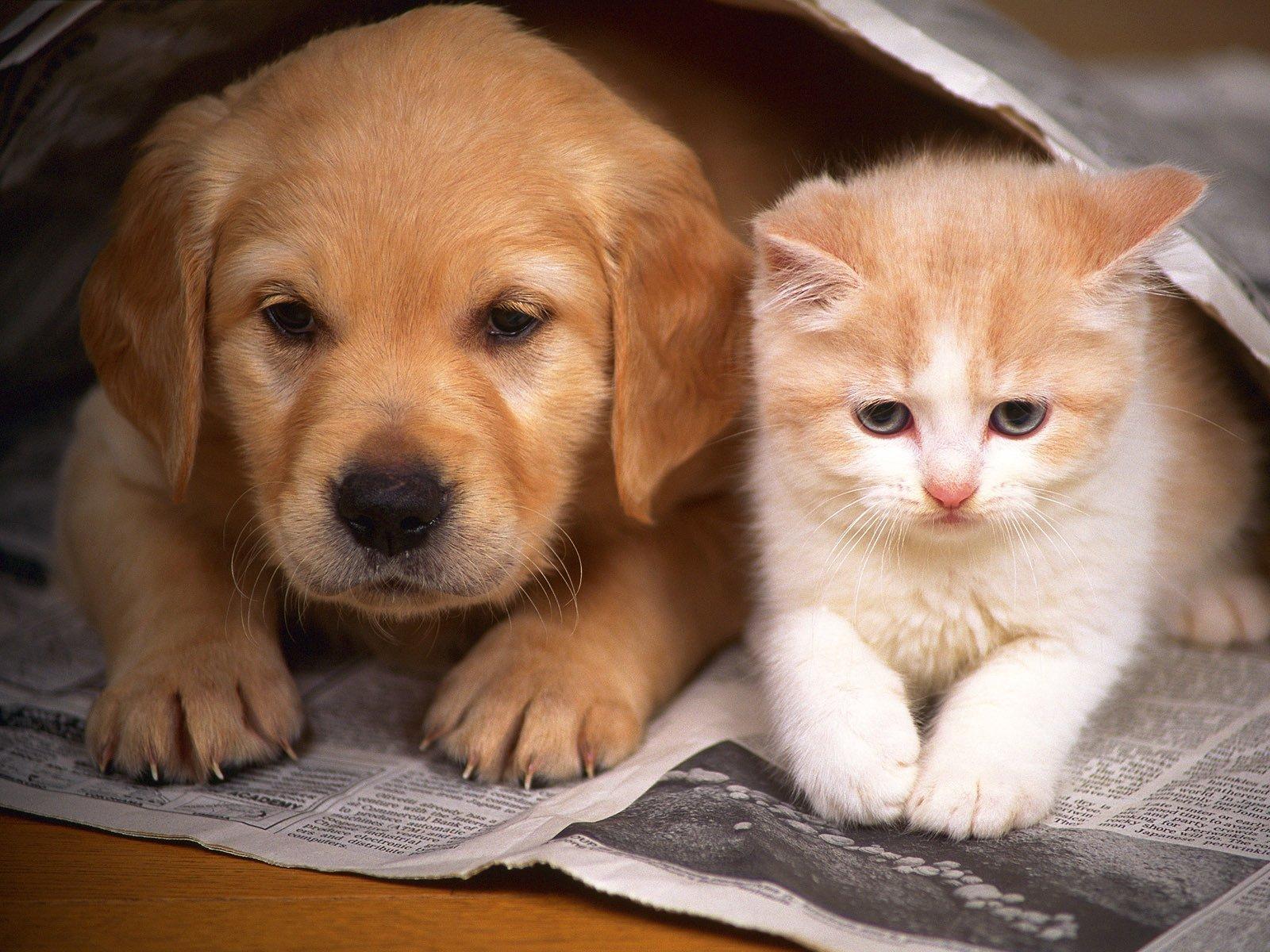 этикетки картинки домашних животных красивые двух маленьких гиперактивных