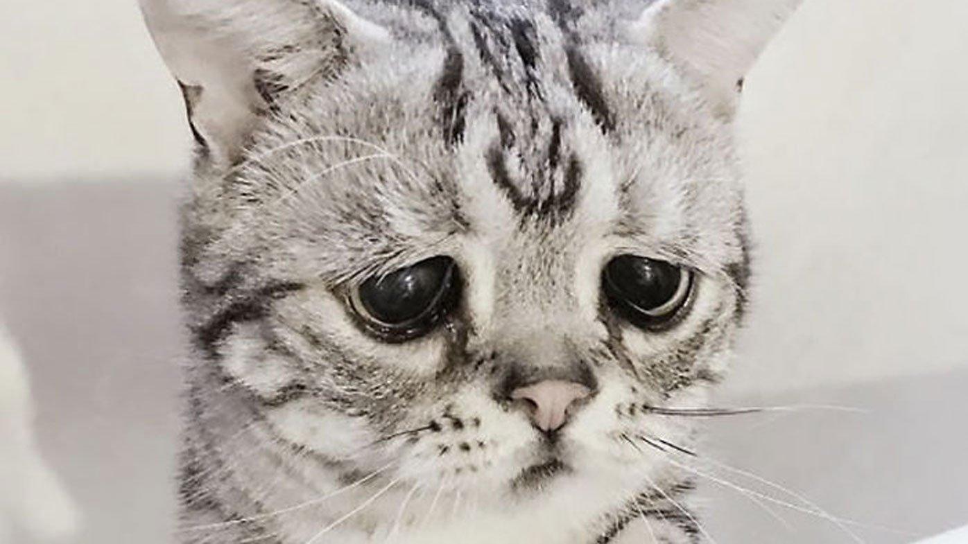 своего картинки грустного плачущего котенка старайтесь снимать при
