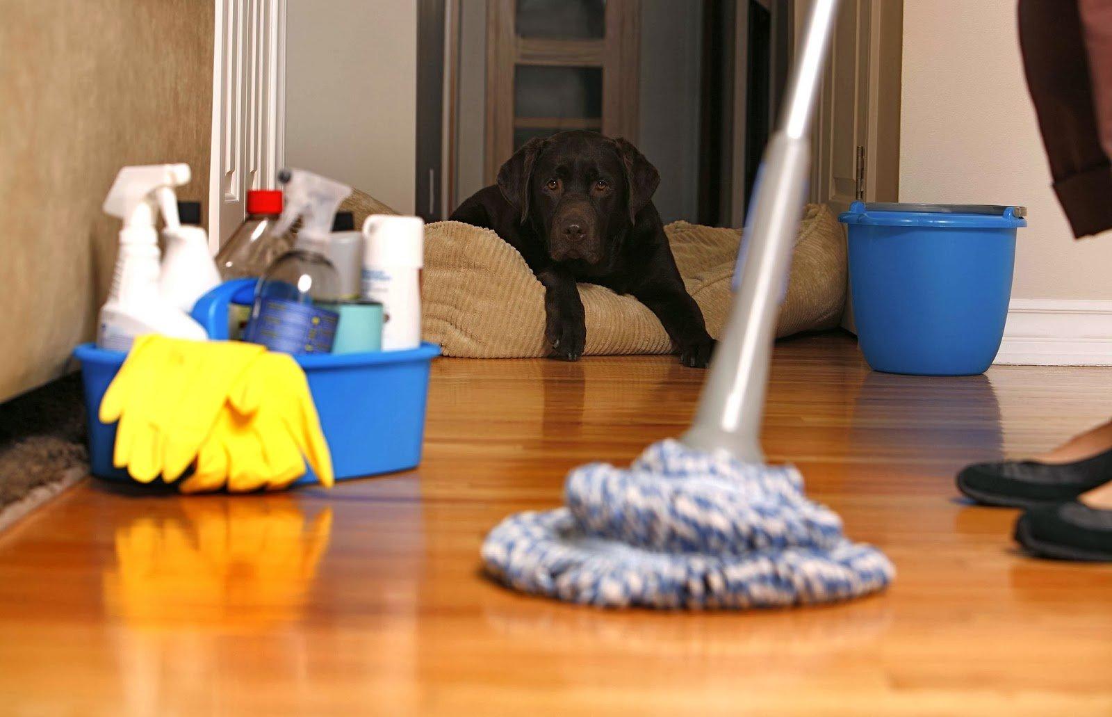 Учёные поведали , чем опасна чистота вдоме