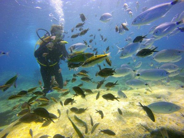 Ученые: Морские обитатели слышат даже отдельного пловца
