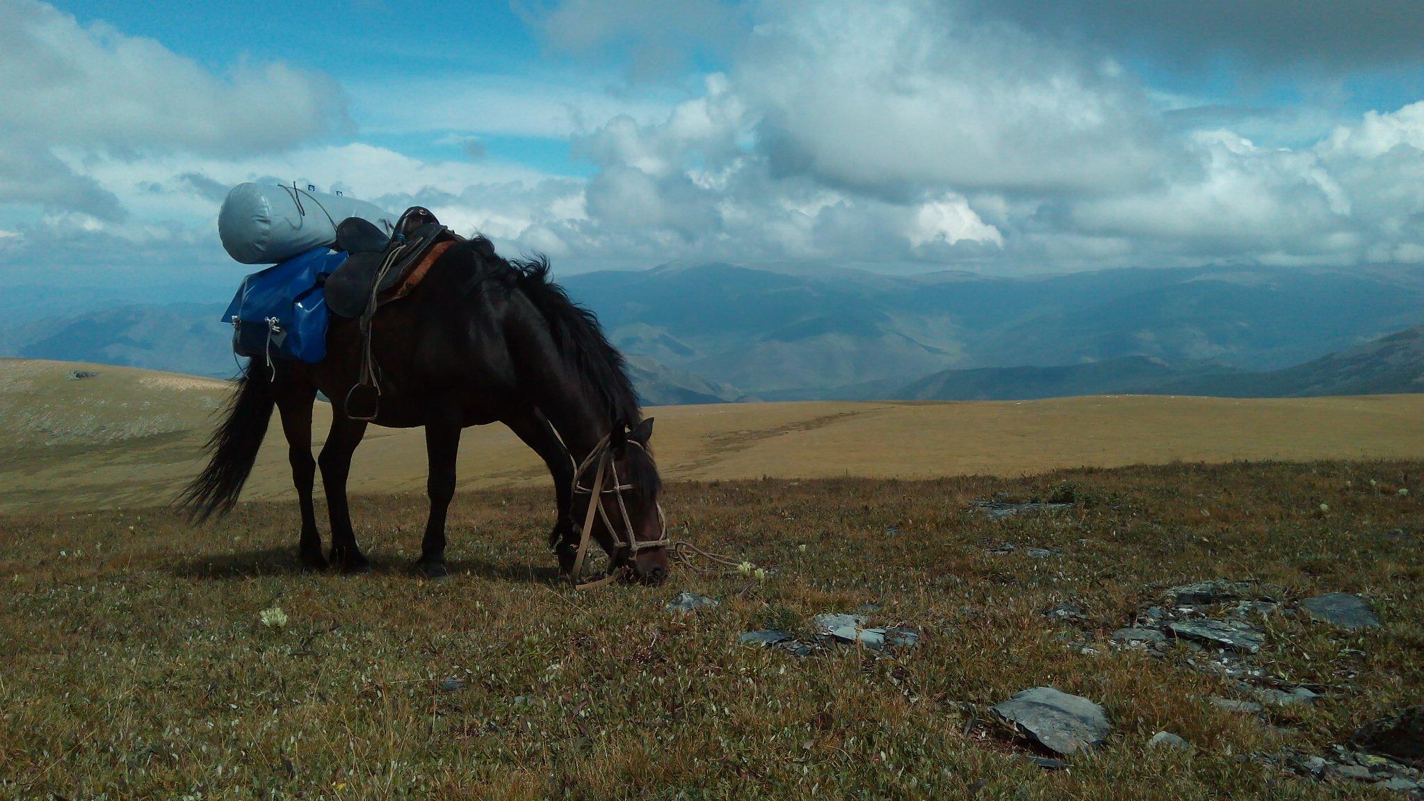 жертвами расправы конный тур алтай фото всегда курсе