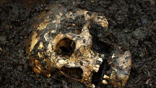 Дачник нашел скелет бывшего мужа сожительницы, копая огород