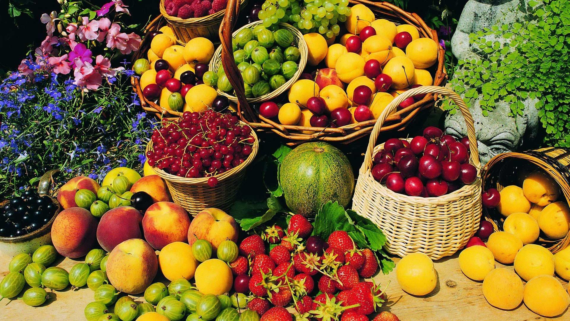 операции кубанские фрукты фото фото каталоге
