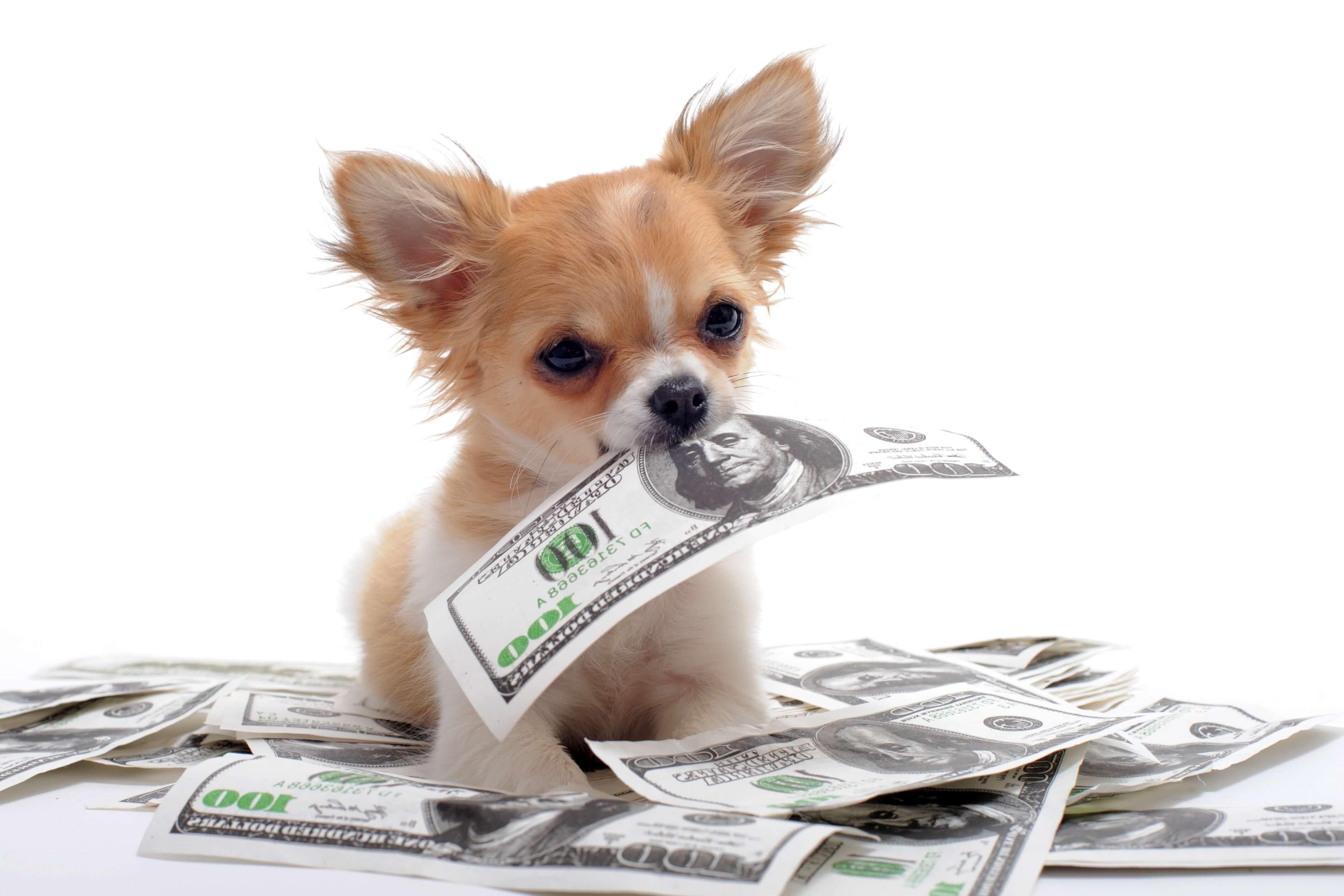 Поздравлением, картинки животные и деньги