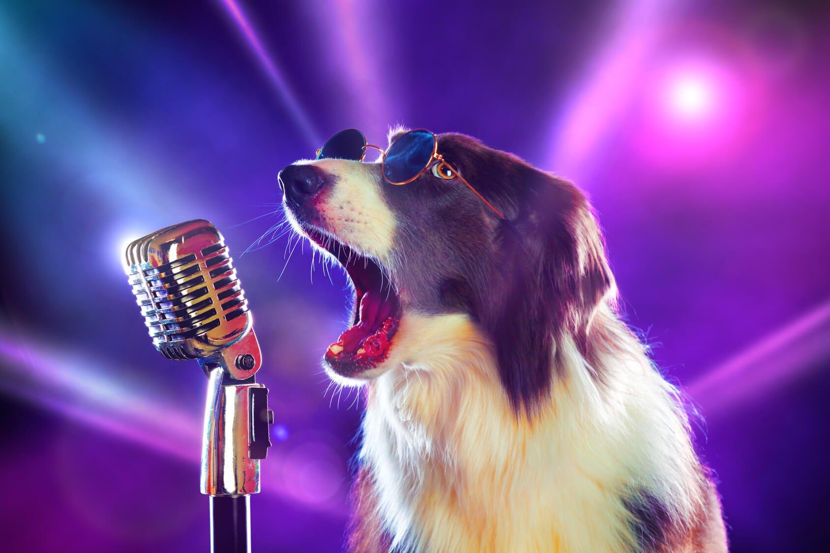 Собака случайно «спела» хит Бритни Спирс