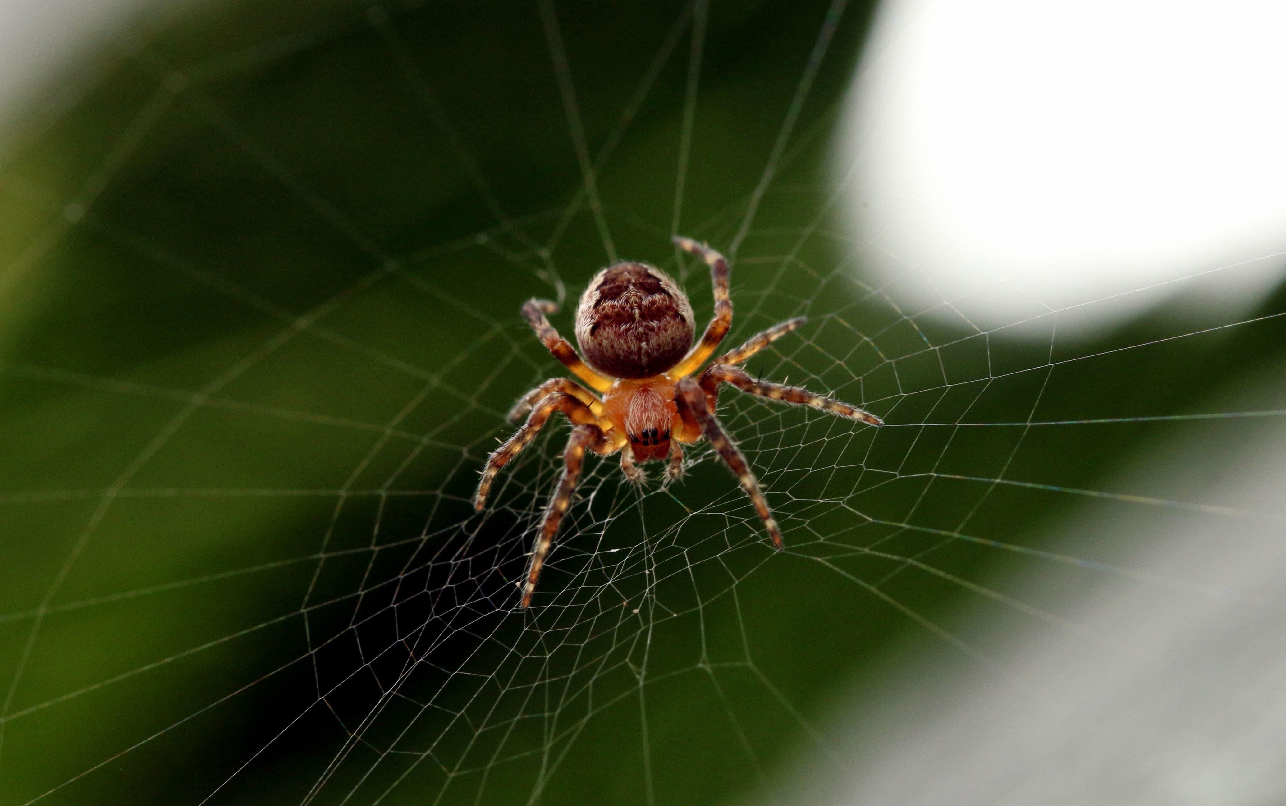 Вмоноблоке отApple под дисплеем поселился паук