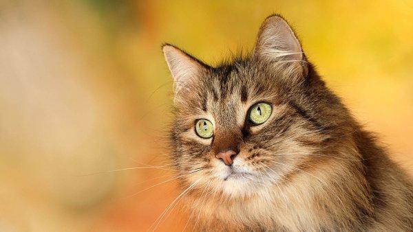 В Винзили неизвестные живодеры режут котам хвосты