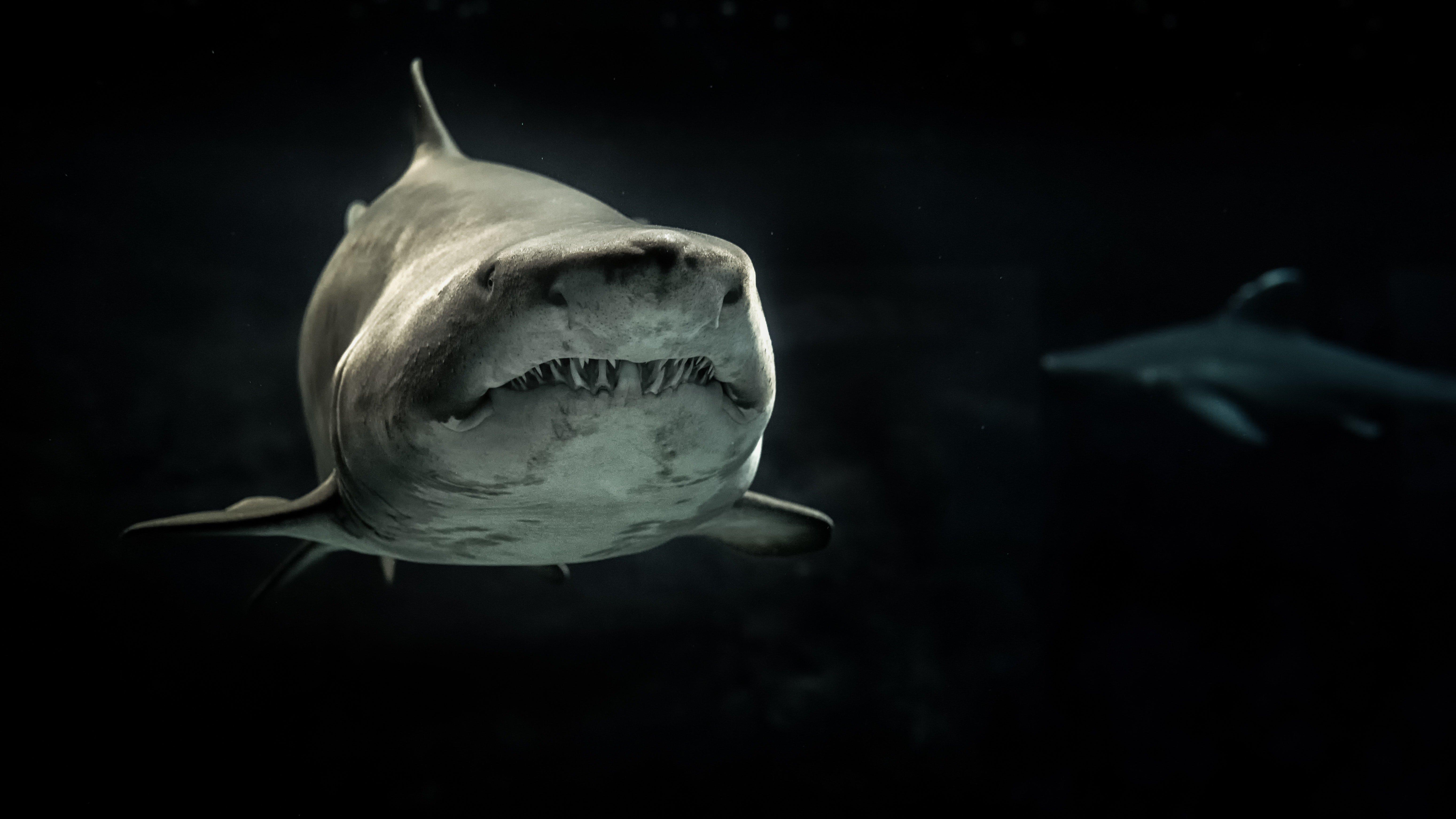 На пляже в Австралии нашли зубы гигантской древней акулы