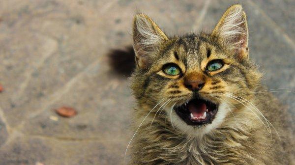 В Шахтах неизвестные живодеры отрубили кошке часть хвоста
