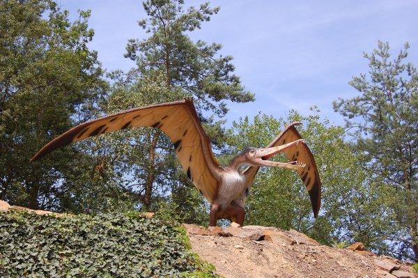 Птерозавра-пеликана назвали самым крупным летающим позвоночным позднего триаса