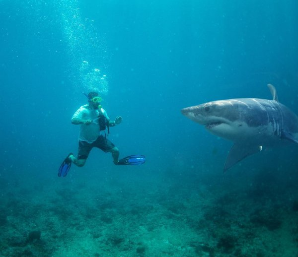 На Мальдивах Тимати рискнул искупаться вместе с акулой