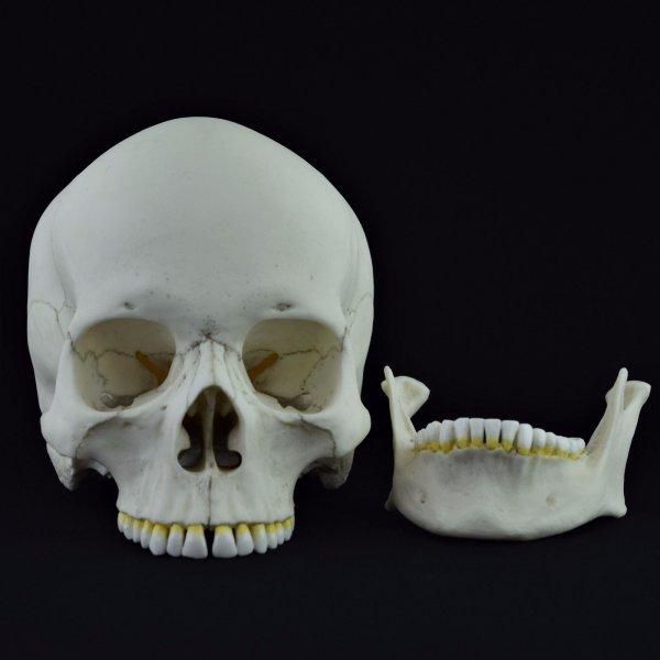 В московской квартире нашли скелет мужчины, умершего восемь лет назад