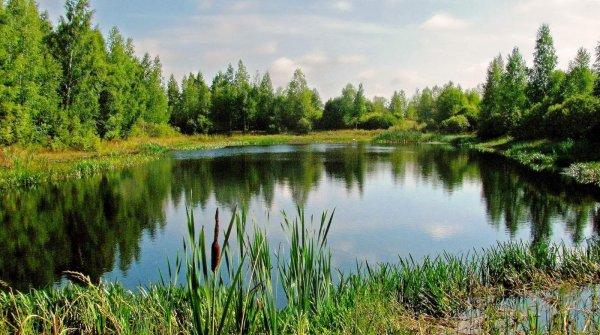 В Архангельской области охотник ненароком застрелил брата на озере