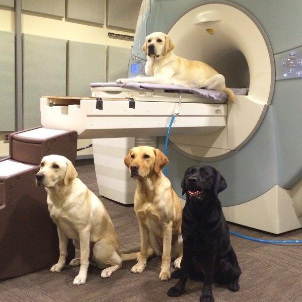 Дрессированные собаки прекрасно понимают человеческую речь – учёные