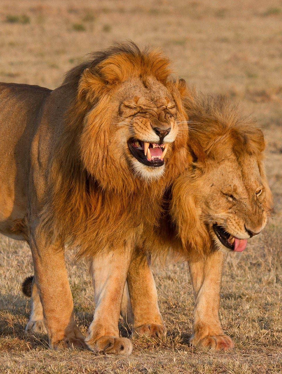картинки смеющихся зверей такие поздравления виновников