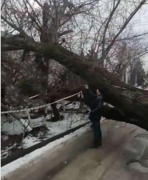 В Ростове дерево с прогнившими корнями упало на жилой дом