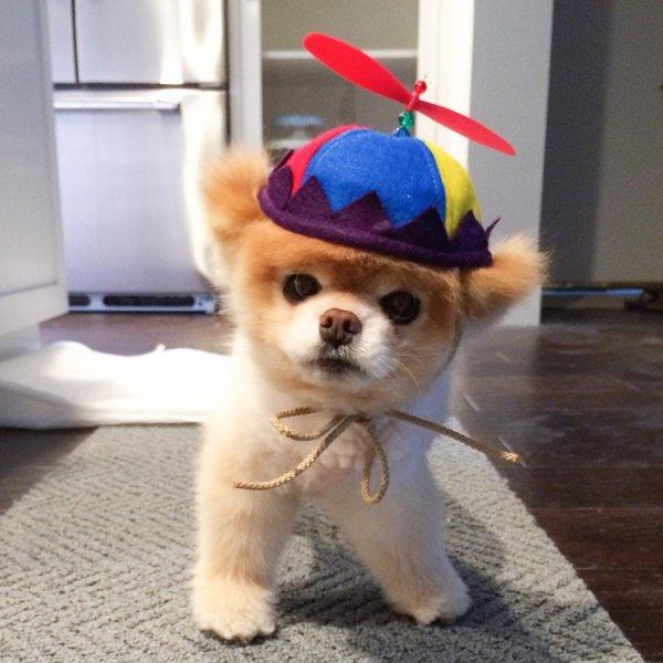 «Самый милый пес в мире» Бу скончался от тоски