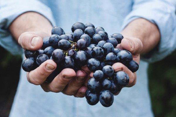 Ученые объяснили причину образования плазмы из винограда в микроволновке