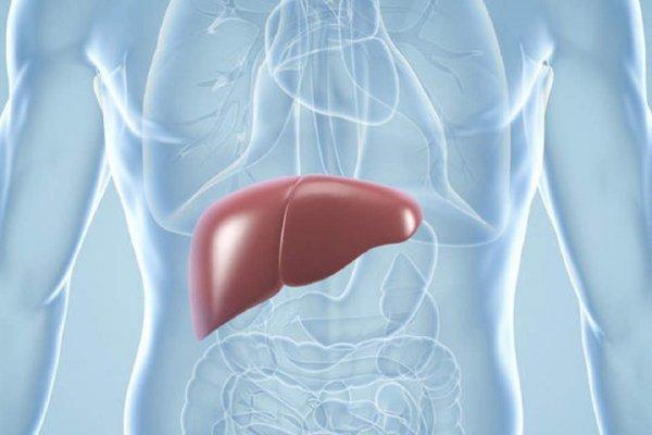 Портальная гипертензия не приговор: Ученые нашли способ лечения смертельной болезни