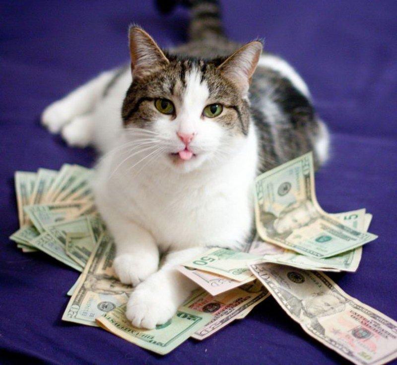Картинки веселые про деньги, открытка