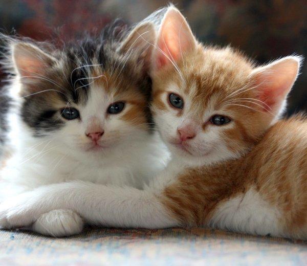 Минсельхоз США после убийства свыше 3000 котов перестанет издеваться над животными