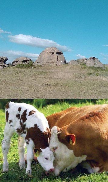 Моча древних людей помогла учёным выяснить историю скотоводства