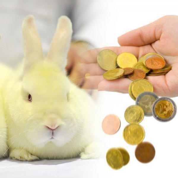 Обнищавшие россияне соглашаются стать подопытными кроликами ради бесплатных лекарств