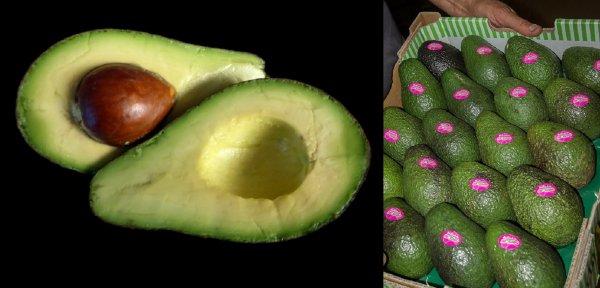 Секрет авокадо раскрыт: Эксперты объяснили, как смертельно опасный плод завоевал мир