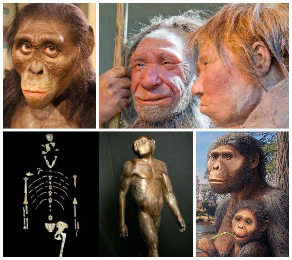 Самка Люси мать Homo sapiens? Учёные опровергли родство с австралопитеком
