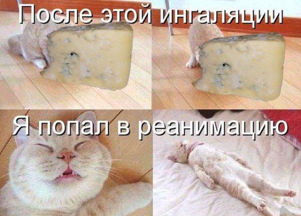 «Горгонзола» по-русски: Клиентка «Магнита» выругала магазин из-за продажи плесневелого сыра