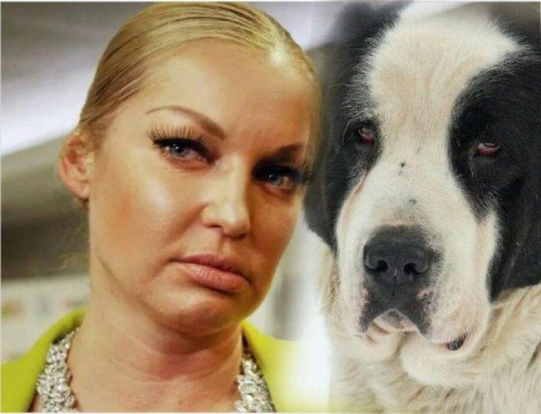 «Недержание шпагата перед собакой!» - Фанаты обвинили Волочкову в неадекватности