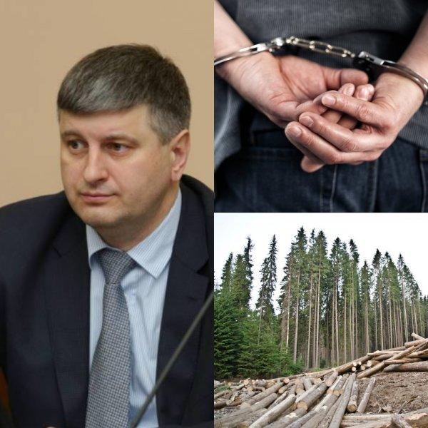 Теневое истребление лесов оставило Сергея Шеверду без отпуска