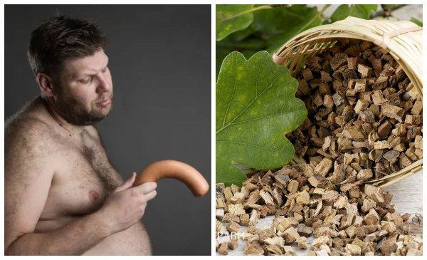 Кора дуба продлевает половой акт и улучшает потенцию – медики