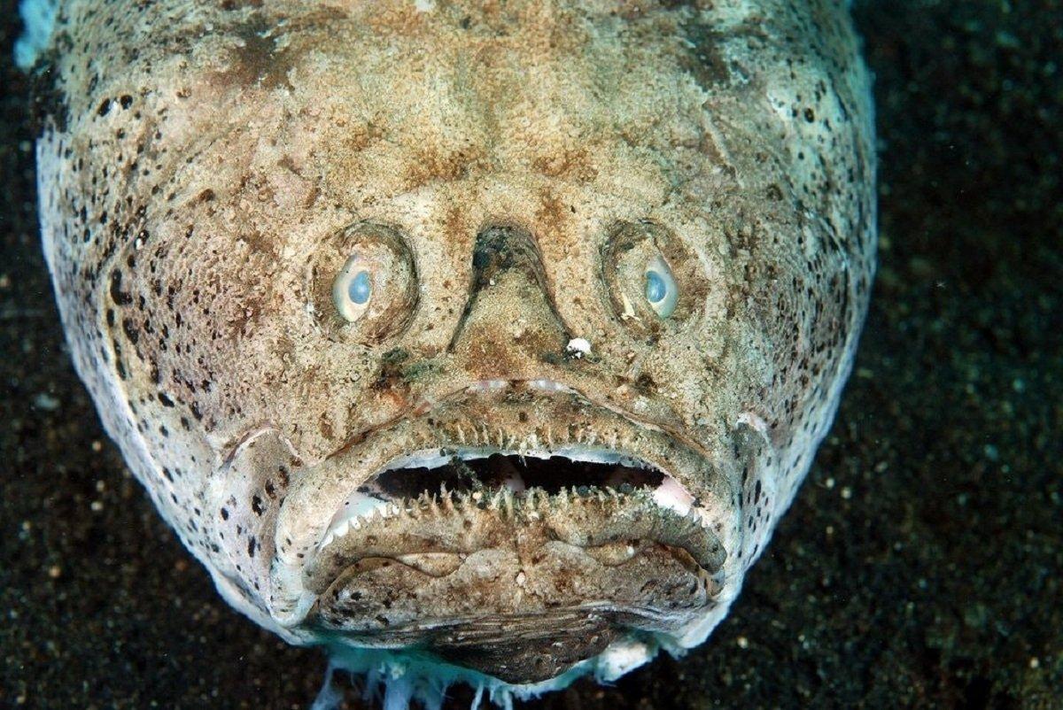 купить фотографии фото рыбы с глубин чтобы сконструировать самодельный