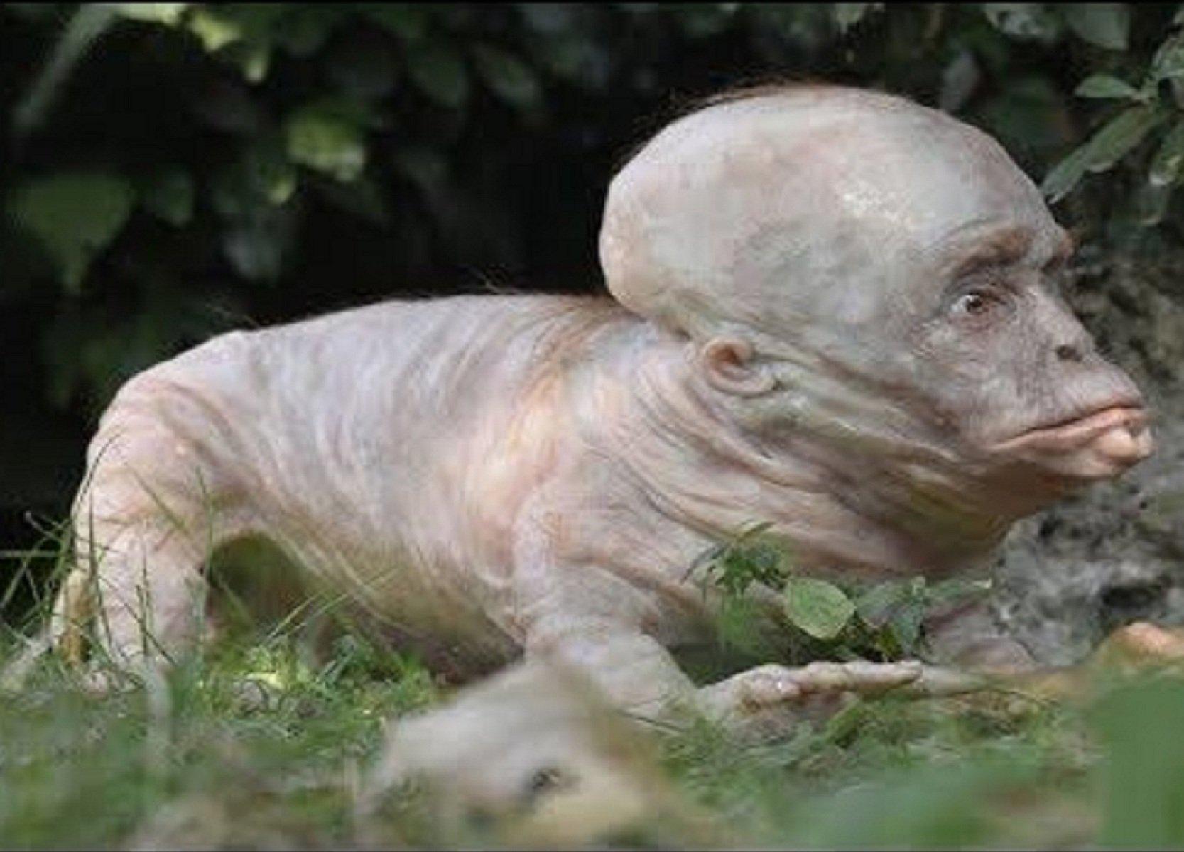 можно картинки про животных мутантов многих ребят