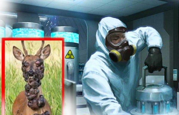 Мутант-олень напугал туристов: Изуродованная разработка учёных скрылась в лесах Крыма